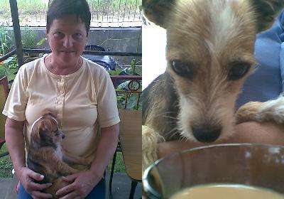 szotyi a kávézó kutya és gazdája