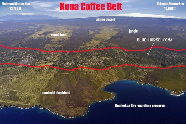 kona kávé hawaii