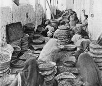 indiai kávétermelés