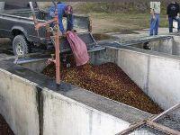 kávétermelés india nedve