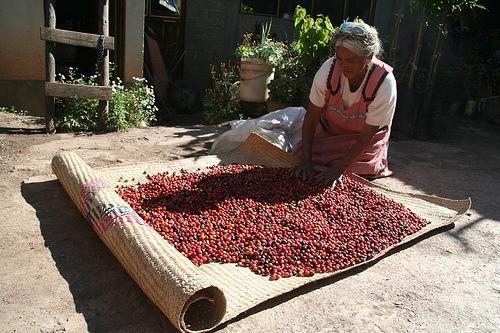kávészárítás mexikóban
